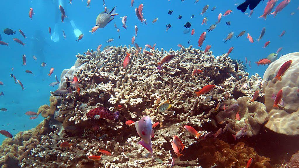 Bali Coral Reefs and Fish - Pulau Boat Charter